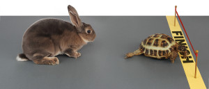 The Tortoise Approach: Slow and Steady Wins the Race